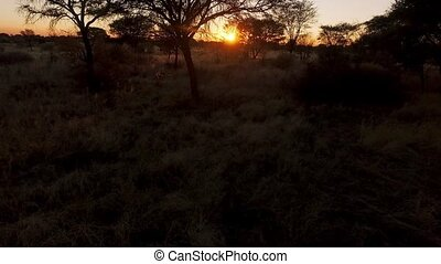 Aerial shot of the sunset in the savannah of Namibia.