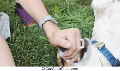 Woman playing with dog on grass - Crop woman playing with...