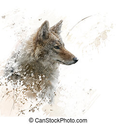 Close Up image of Coyote watercolor - digital painting of...