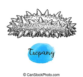 Trepang ink sketch. Isolated on white background. Hand drawn...