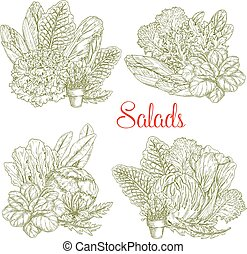Vector sketch salads and farm lettuces vegetables - Lettuce...