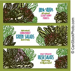 Salads leafy vegetables vector banners set - Salads banners...