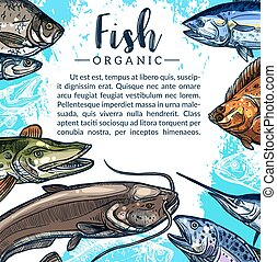 Vector poster of fish catch for fishing market - Fishing...