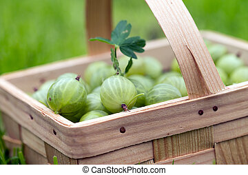 Gooseberries - gooseberries in a basket