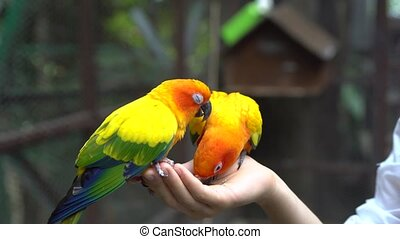 Hand Holding and Feeding Parrots - Animal Care Concept. -...