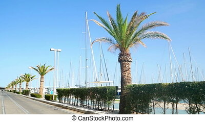 Floats yacht palm summer - Sailing ship floats in the sea,...