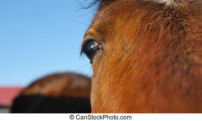 Close up of a horse's eye
