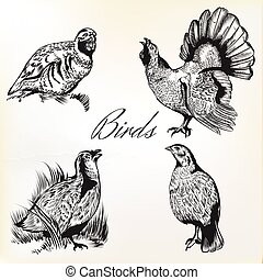 Collection of vector hand drawn birds in vintage style.eps