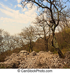 Karst rock and trees - View of Karst rock and trees in Santa...