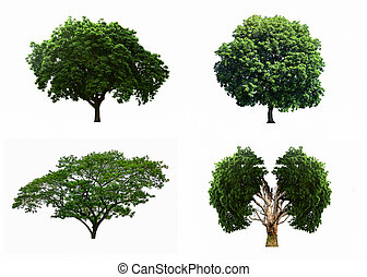 Big four tree sets isolated on white background.