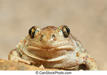 portrait of cute spadefoot toad