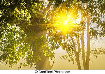 sun translucent through krone of tree.