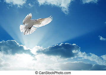 Holy Spirit dove flies in blue sky
