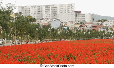 Dalat city with red flowers. Vietnam. (Shot in Full HD -...