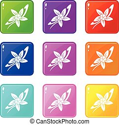 Vanilla sticks with a flower icons 9 set