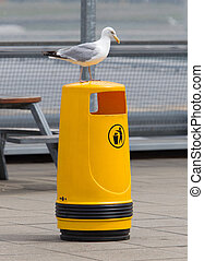 skrzynia,  Seagull, stary, Żółty