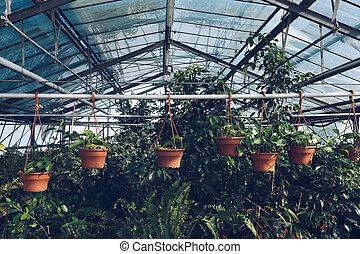 planten, binnen, metafoor, tabel