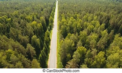 Highway among the forest. - Highway among the green woods in...