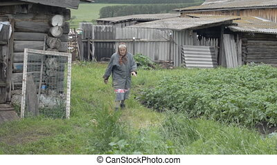 Old grandmother walks a motley chicken with small chickens....