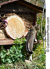 grey young cat looking on insect hotel for wild bees.