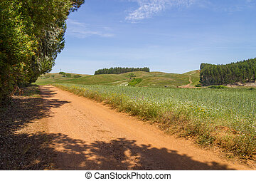 Farm field in Vale Seco, Santiago do Cacem, Alentejo,...