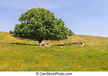 Tree in the field in Vale Seco, Santiago do Cacem, Alentejo,...