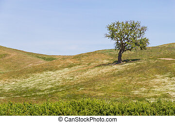 Cork tree alone in a farm field in Vale Seco, Santiago do...
