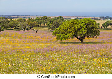 Farm field with flowers and Cork tree in Porto Covo,...
