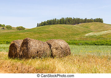 Hay pile in a farm field in Vale Seco, Santiago do Cacem,...