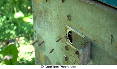 FullHD slowmotion footage. Plenty of bees at the entrance of beehive in apiary.