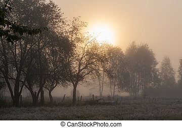 Old garden trees in misty morning with sun rising, Podlasie...
