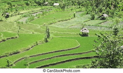 Aero view on rice terraces of mountain and house of farmers. Bali, Indonesia