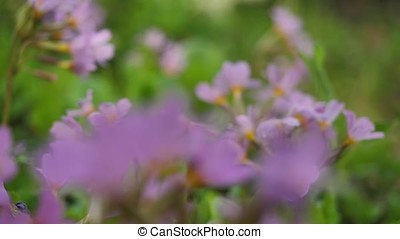 Wild flowers and plants. Wild flowers. Colorful flowers on the field. Wildflowers among grass and wild flowers close up