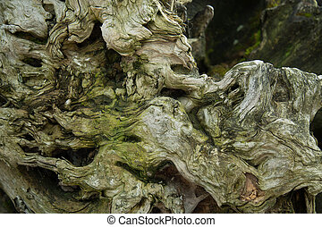 Tree log mossy old natural green background