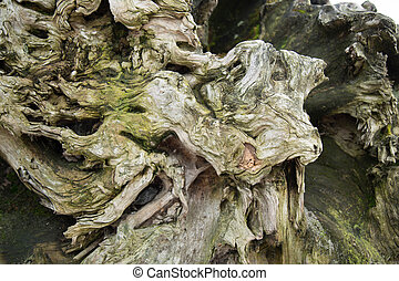 Roug weathered wood surface tree trunk