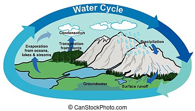 Water Cycle in Nature Diagram
