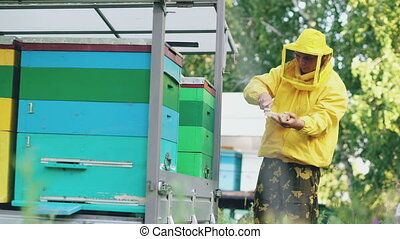 Young beekeeper man clean wooden honey frame working in the apiary on summer day