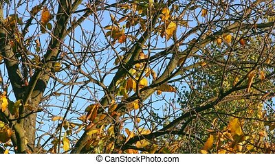 Autumn tree leaves - Colorful autumn leaves rustling in the...