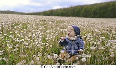 Cute little boy sitting on the ground eating dandelion. -...