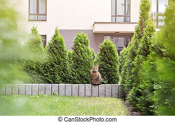 Tabby cat sitting on stone small wall surounded by...