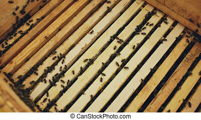 Closeup of bees in honey wooden frames at beehive in apiary...