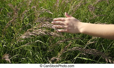 Girls hand touching the grass at field, slow motion