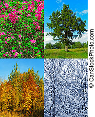 Four seasons - nature background