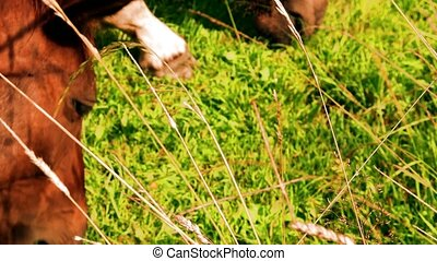 View of farm horses on pasture. Weed management plans for...