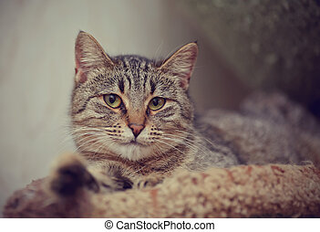 Portrait of the striped lying cat. - Portrait of the striped...