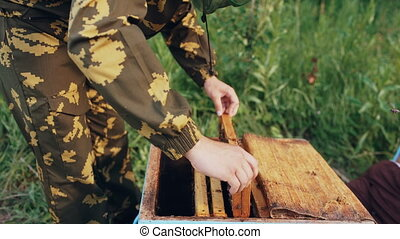 Young beekeeper man holding wooden frame with bees for checking while working in apiary