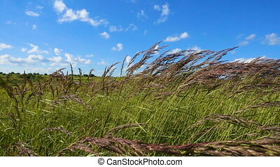 Green grass sways in the wind, slow motion