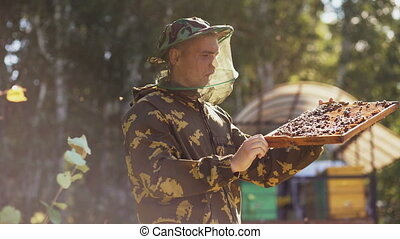 Beekeeper man checking wooden frame before harvesting honey...