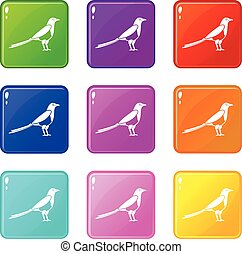 Bird magpie icons 9 set - Bird magpie icons of 9 color set...