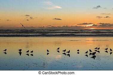 Birds of Foxton Beach
